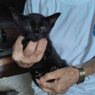 馴れなれの可愛い黒猫女子!