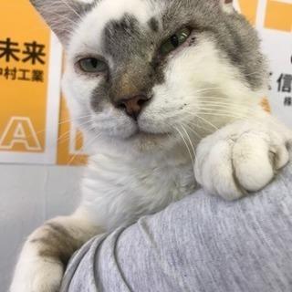 ブサ顔ゆる猫ぶーちゃん