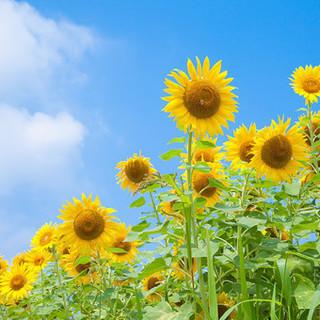 畑で野菜やお花を育てませんか?☆畑を貸します。  旭市萬歳 約1...