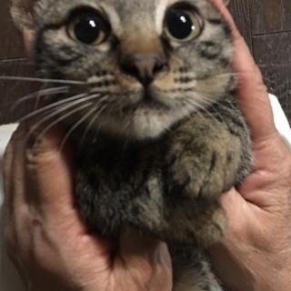 生後3ヶ月なれなれのオス子猫
