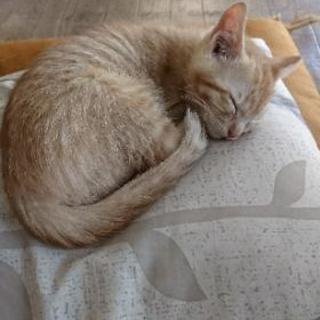 生後2ヶ月ぐらいの猫ちゃん!