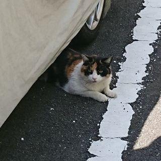 野良猫ですが人懐こいです