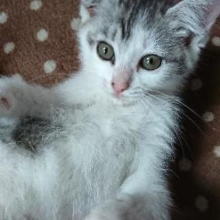 【急募】保護猫里親さん募集。