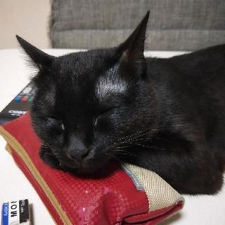 1歳と4ヶ月の黒猫君です
