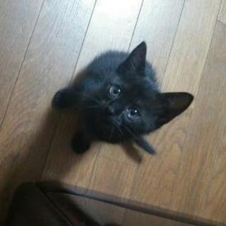 3匹の黒猫ちゃんです✩