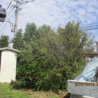福岡、借家、植木の枝落とし、草刈り、