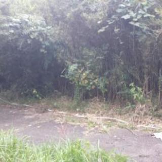 山林50坪+私道路共有分(一件交渉中)