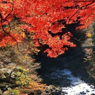 11/11 東京・奥多摩町 親子ハイキング! (シングルマザー・シ...