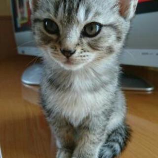 ☆里親さん募集中☆かわいい子猫たち!