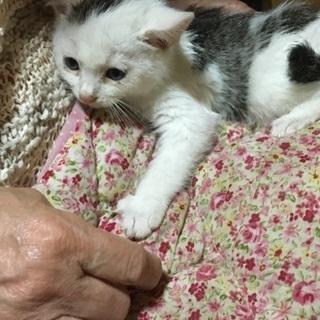 生後1カ月くらいの子猫です。