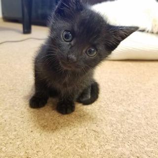 黒猫子猫の里親さん募集
