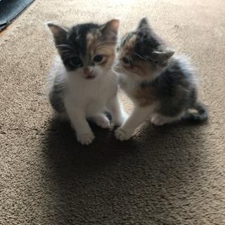 子猫 2匹