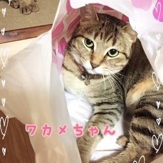 【急募】愛嬌満点の可愛らしい子(ワカメ)