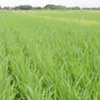 1つのみ 2020年度 ヒノヒカリ 玄米 30k 古米