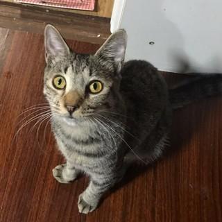 子猫の里親さん募集です(38)