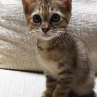 【募集終了しました】子猫里親さん募集