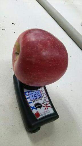 陽光 りんご