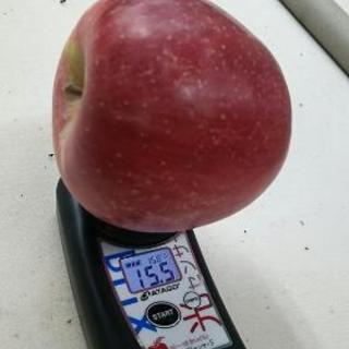 あまーいりんご「陽光」お得におためし♪1kg150円【特別栽培】