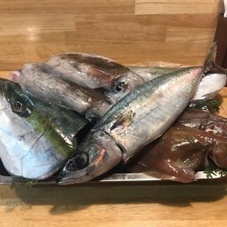 佐渡島のお魚  第六弾!