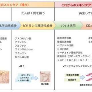 美容 業界で注目 ヒト幹細胞培養液のお手入れ体験!