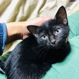 2ヶ月☆子猫ポポくん♡黒猫