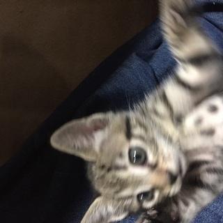 小さくて人懐こい猫ちゃんです