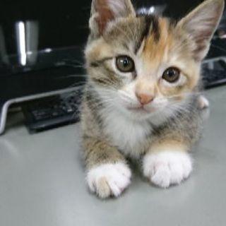 保護猫(子猫)