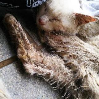 【愛護団体に相談中】野良猫(成猫)人懐っこい可愛い子です。