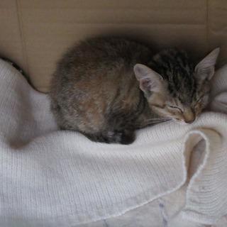 人慣れした、人懐っこい子猫さんです☆親兄弟に置いて行かれて…