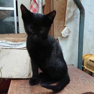 黒子猫×3【2名の里親さん見つかりました。残りはとりあえず自宅に保護】