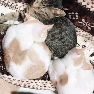 子猫貰ってください(^人^)