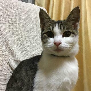 とても人懐っこいかわいい仔猫です。