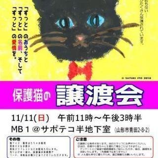 🐈保護猫の譲渡会🍀