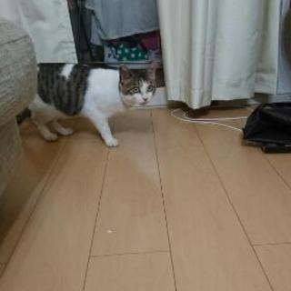 キジシロ甘えん坊です!