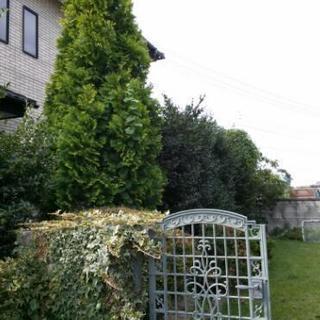 庭木の剪定.造園作業.茨城県.造園業