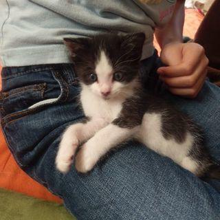 生後約1ヶ月の子猫の里親さんを募集してます‼️