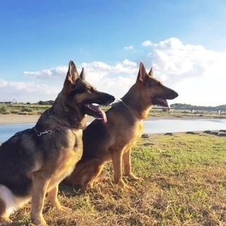 犬好きさんへ!学ぼうトリミング技術・訓練技術を!(生徒募集)神戸愛...