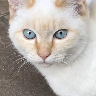 〈決定しました〉かわいい子猫(オス4か月)
