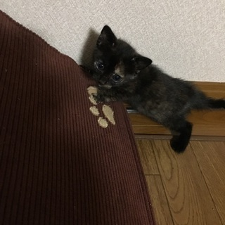 生後約2カ月の子猫の里親募集