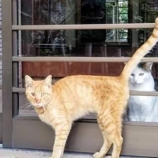 野良猫を助けてください