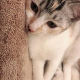 生後半年の子猫