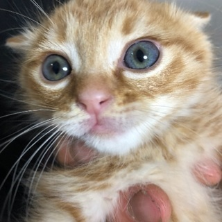 生後二カ月可愛い子猫 オス。