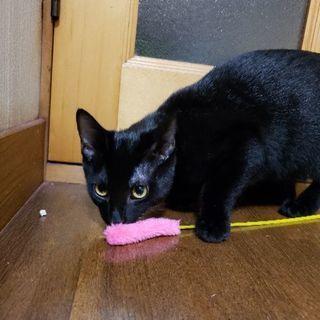 5ヶ月の黒猫です