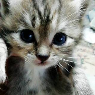 生後1ヶ月の子猫里親さん探してますの画像