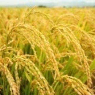 平成30年度  新米  玄米30キロ