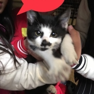 ❤️白黒可愛い子猫ちゃん❤️