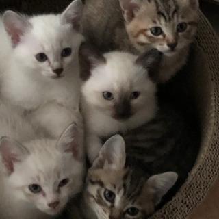 子猫がおります