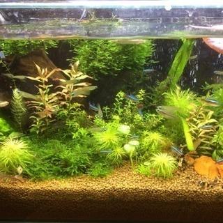 熱帯魚に 興味のある人 語りましょう!