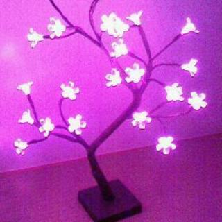 夜桜 イルミネーション