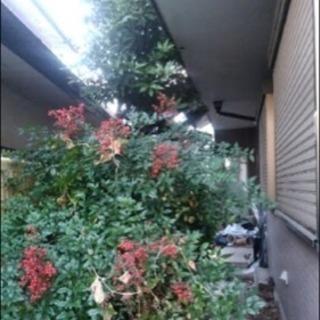 お庭を綺麗にしませんか?